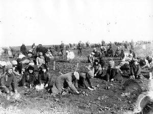 Lapset kaivavat jäätyneitä perunoita yhteiseltä pellolta vuonna 1933.